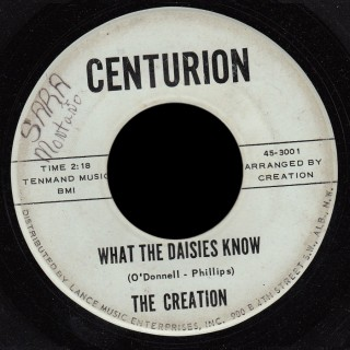 Creation Centurion 45 What the Daisies Know
