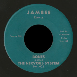 The Nervous System Jambee 45 Bones